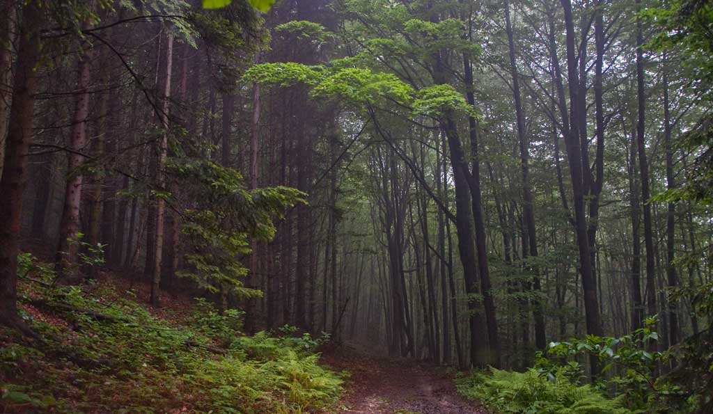 Trest, veličanstvena Homoljska šuma