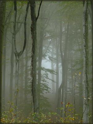 U mističnim šumama Đerdapa