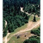 Staza koja se strmoglavljuje niz padine Javora - idealna za downhill MTB trke, zar ne?