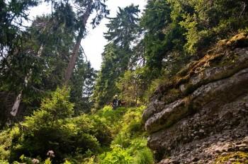 Strmo kroz gustu šumu dalje ka Koprenu