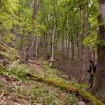 Traženje puta kroz šumu ka Čoka Njalti