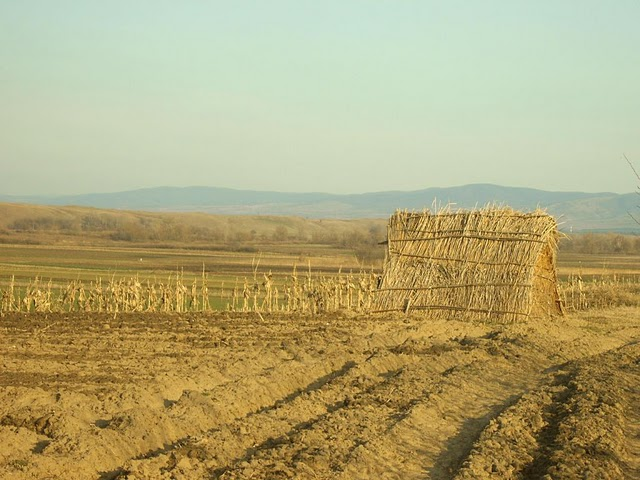 Izmedju peščanih dina