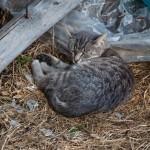 Jedna od baka Olginih maca