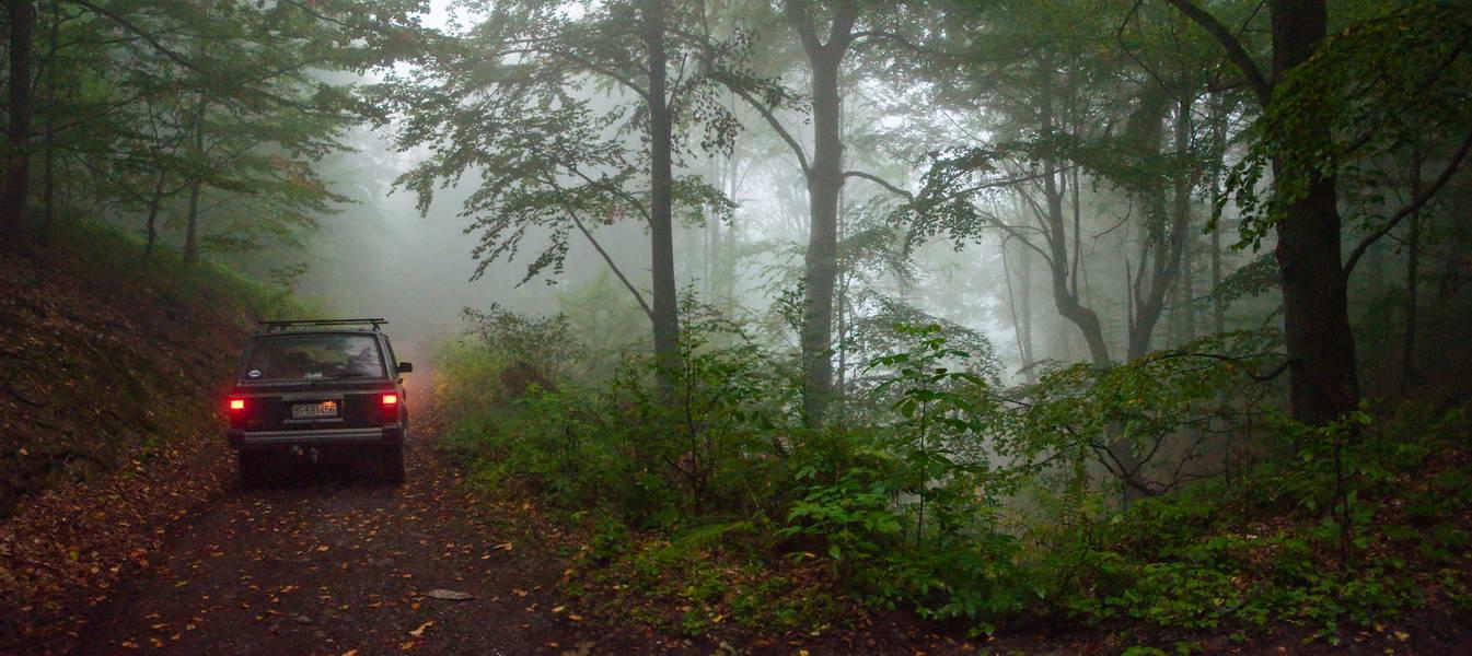 Na šumskom putu koji vodi ka Selištu